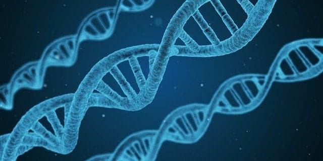 adn genética en la regla